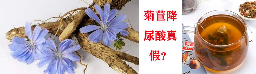 菊苣降尿酸真假.jpg